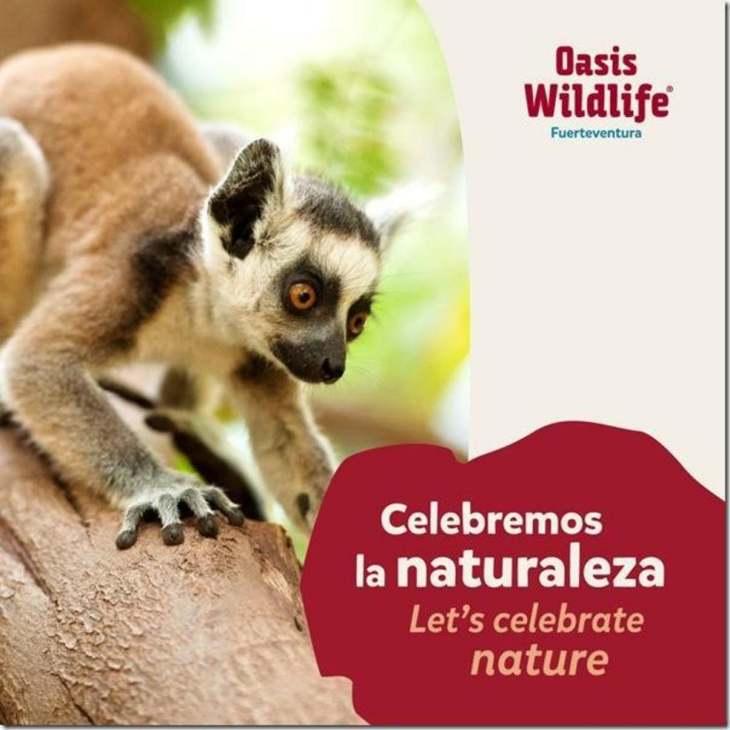 Oasis Wildlife